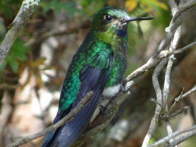 Ecuador, un paraíso para las aves más diminutas del mundo