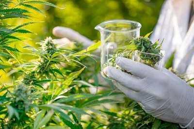 Giuzzio, a favor del debate para la legalización de la marihuana