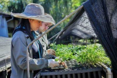 Itaipu trabaja en reforestación de 1.900 hectáreas de áreas degradadas