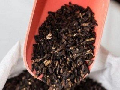 Harina de insectos y helado de grillos contra la escasez alimentaria