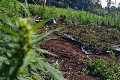 """Operativo """"Nueva Alianza"""" ocasiona duro golpe al narcotráfico"""
