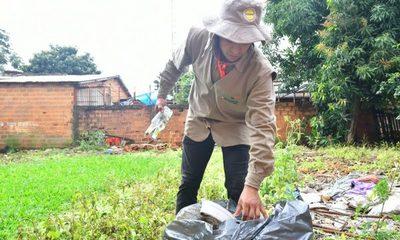 Disminuyen casos de dengue en Alto Paraná