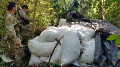 Anulan más de 1.200 toneladas de marihuana en Amambay