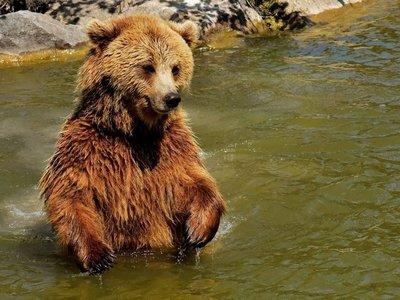 Estudio refleja un incremento de los ataques de osos a seres humanos