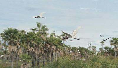 Observación de aves en el Chaco entre intereses de turismo para fin de semana
