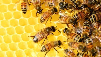 Miel: producción local llegará a las 850 toneladas, pero el consumo interno es de 3.000 toneladas
