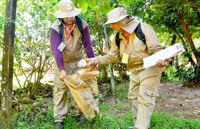 Dengue: desciende en Alto Paraná y Amambay