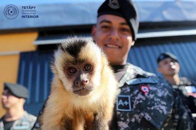 Linces ya tienen permiso para tener a mono como mascota