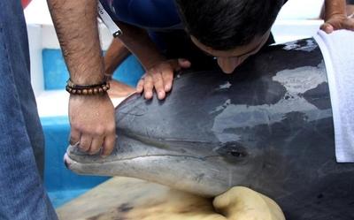 EEUU investiga causas de muertes de más de 270 delfines en Golfo de México
