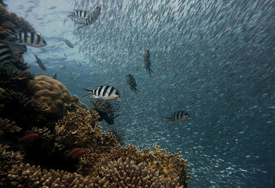 Fish Will Start Losing Sense of Smell as Carbon Dioxide Levels Rise, Study Finds