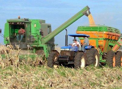 Hay mayor consumo de maíz en mercado local