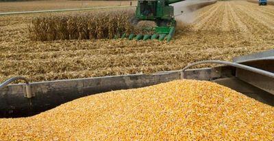 Aumentó el consumo de maíz en el mercado local para etanol y alimento animal