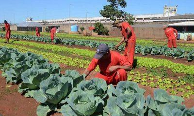 Propondrán ley que obligue a presos a producir sus alimentos