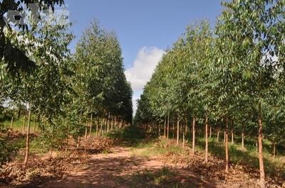 Urgen políticas forestales serías y de integración