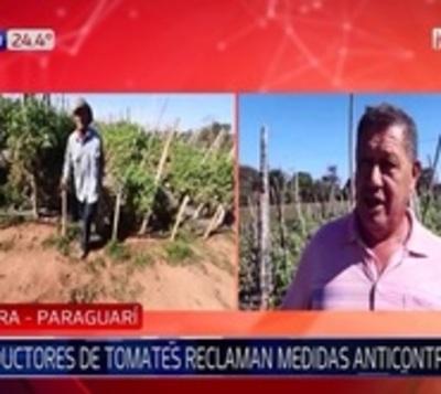 Productores de tomate de Paraguarexigen medidas anticontrabando