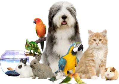 Portal paraguayo para mascotas ofrece más de 1000 productos