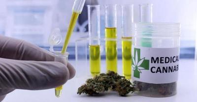 Paraguay se alista para uso de cannabis medicinal en mesa interinstitucional