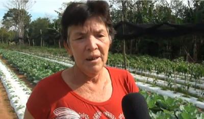 Productoras agrícolas de Misiones apuntan a ampliar sus negocios familiares