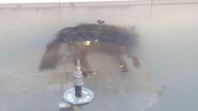 El perro congelado que conmueve a Bolivia