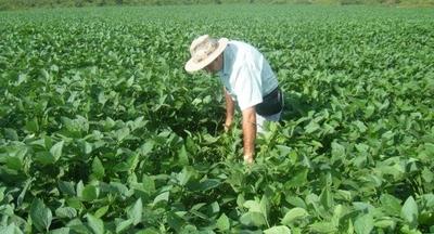 HOY / Crédito Agrícola: el 95 % paga sus deudas, pese a desaceleración económica
