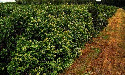Productores de yerba reclaman incumplimiento de pacto