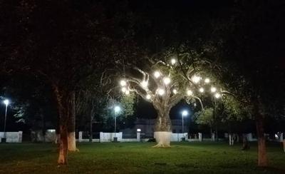 HOY / Eligen al nuevo 'árbol de la gente': un samu'u de Nueva Londres