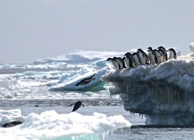 El rápido deshielo de la Antártida se inició en 2014