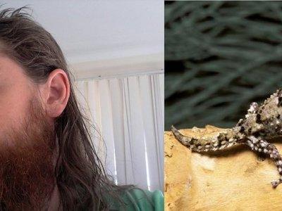 Comió una lagartija y falleció tras 10 días de agonía