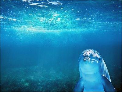 Delfines regulan cada latido de su corazón mientras bucean