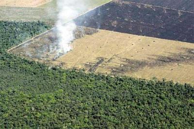 """Senadores rechazan proyecto de ley de """"deforestación cero"""""""