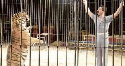 Tigres de circo matan a domador en Italia