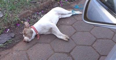 Asesinan  de forma horrible a  un pitbull