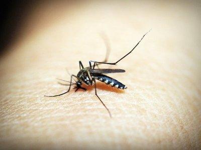 Alertan sobre otro virus transmitido por mosquitos