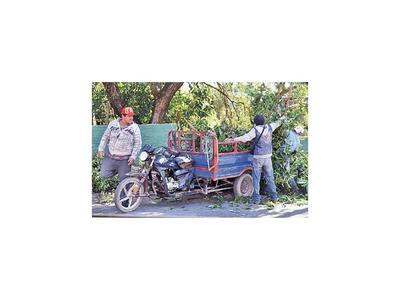 Motocarros invaden Asunción con  restos de árboles podados