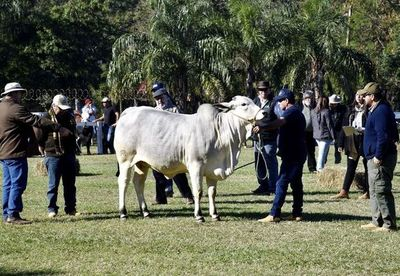 Se realiza admisión de animales en primeros días de la expo más destacada del país