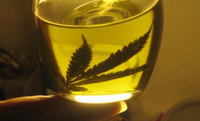 Productor de aceite de cannabis cumple 3 años de prisión