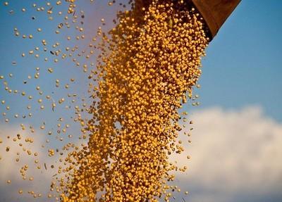 Prevén desaceleración de la soja en Latinoamérica