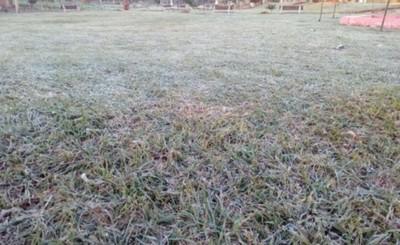 Productores perdiero el 50% de cultivos durante helada