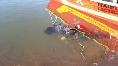Sacan el cadáver de un hombre que cayó con su camioneta al lago Acaray