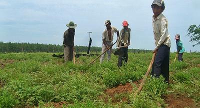 Itaipu con proyecto apoyará a 10.000 nuevos productores de la agricultura familiar