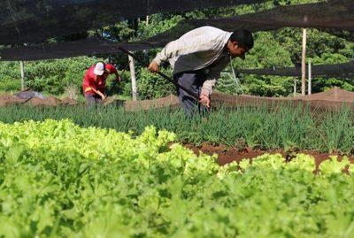Itaipú apoyará a 10.000 nuevos productores de la agricultura familiar mediante proyecto