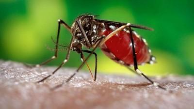 Temporada de frío propició disminución en virus de arbovirosis