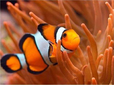 Científicos descubren mecanismo de cambio de sexo en los peces