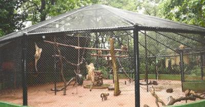 El zoológico de  Encarnación para  dar un paseíto