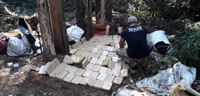 Desarticulan campamentos narco en reserva forestal