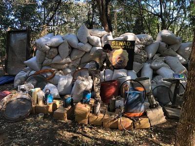 SENAD desmantela campamentos en Capitán Bado y destruye unas doce toneladas de marihuana
