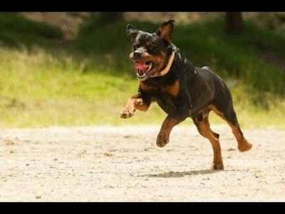 Rottweiler ataca a un hombre y le amputan el brazo
