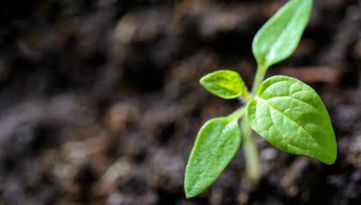 ¿Problemas con el cultivo de hortalizas o el ganado? Esta app te puede ayudar