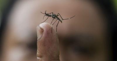 Filipinas declara alerta nacional por brote de dengue tras 456 muertes