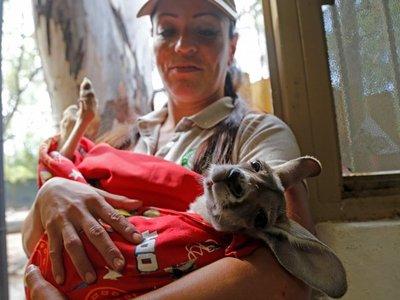 Khya, la canguro bebé criada por humanos en México
